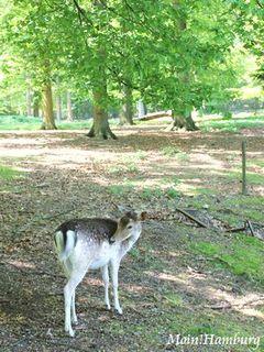 鹿公園 Hirschpark